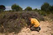 Life Lince (lynx) field technician, Leonardo Fernandez Pena restocking a Wild Rabbit breeding enclosure. The idea of the enclosure is to augment rabbit densities in areas where they are below threshold for lynx sustainability. Within the breeding enclosure are artificial (lynx proof) rabbit dens which vastly increase carrying  capacity of rabbits. The enclosure is surrounded by a predator-proof fence overwhich the lynx can jump, but through which rabbit predators such as foxes, badgers, mongoose or wild boar cannot pass. <br /> Doñana National & Natural Park. Huelva Province, Andalusia. SPAIN<br /> 1969 - Set up as a National Park<br /> 1981 - Biosphere Reserve<br /> 1982 - Wetland of International Importance, Ramsar<br /> 1985 - Special Protection Area for Birds<br /> 1994 - World Heritage Site, UNESCO.<br /> The marshlands in particular are a very important area for the migration, breeding and wintering of European and African birds. It is also an area of old cultures, traditions and human uses - most of which are still in existance.<br /> <br /> Mission: Iberian Lynx, May 2009<br /> © Pete Oxford / Wild Wonders of Europe<br /> Zaldumbide #506 y Toledo<br /> La Floresta, Quito. ECUADOR<br /> South America<br /> Tel: 593-2-2226958<br /> e-mail: pete@peteoxford.com<br /> www.peteoxford.com