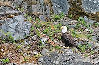 Flora and fauna of beautiful Quadra Island, British Columbia, Canada