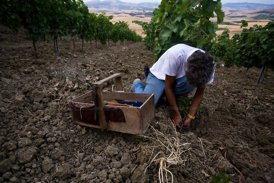 Field Work by Cooparativa Placido Rizzotto - Sicily