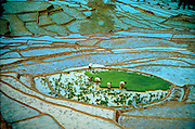 SRI LANKA, AGRICULTURE planting rice on flooded terraces in the southern highlands near Bandarawela