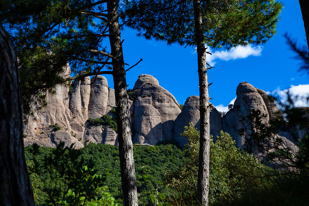Pine forest,  mountain of Montserrat, near Barcelona, Catalonia, Spain