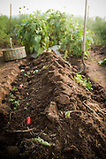 Soil and dirt in a newly turned bed waits for plants.