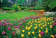 Tulips in urban garden; Royal Botanical Gardens. Hamilton, Ontario