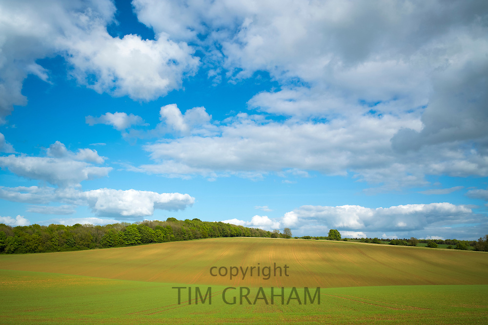 Subtle colour and contours of a crop field and puffy clouds in late Spring / early Summer in the Gloucestershire Cotswolds, UK