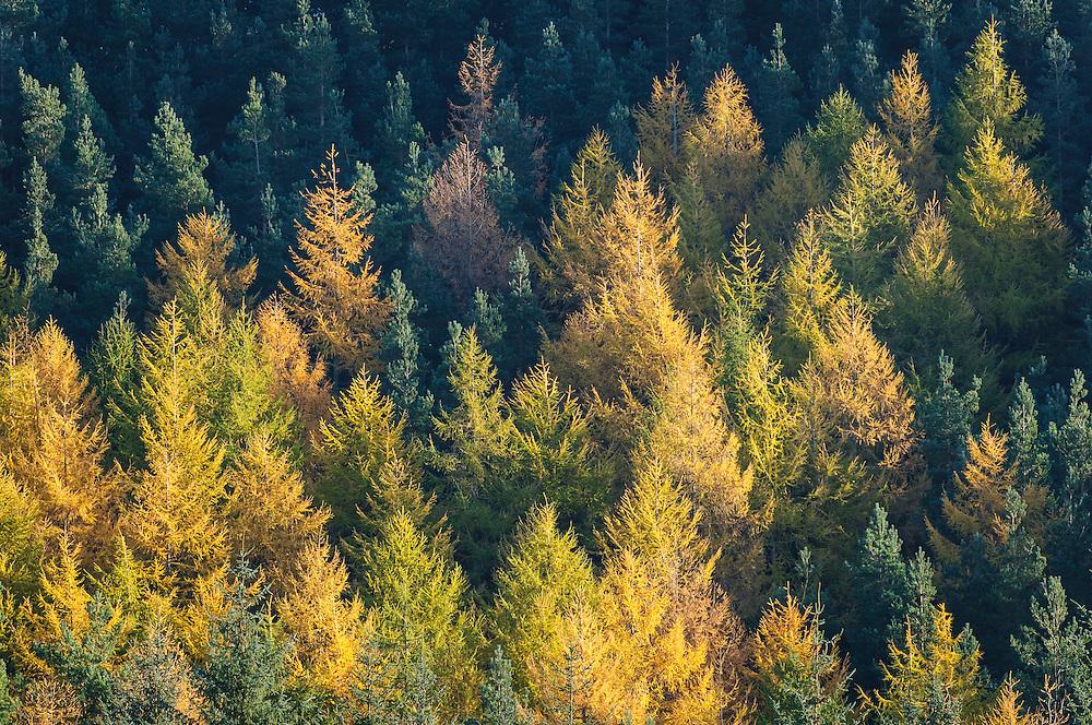 Autumn views around Selkirk