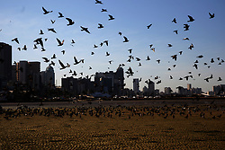 South Africa Durban - 21 JUNE 2020 -Coronavirus :  The sky is the limit for the doves at Durban harbour<br /> PICTURE :Bongani Mbatha /African News Agency (ANA)
