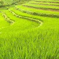 Vietnam Selected Shots