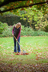 Raking up leaves from a lawn
