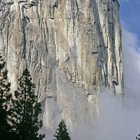 The southwest face of El Capitan towers above trees and rising fog.