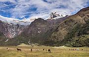 Trek at 3700 meters elevation in Jancapampa Valley under 6000-meter peaks of Nevados Pucajirca. Day 4 of 10 days around Alpamayo in Huascaran National Park (UNESCO World Heritage Site), Cordillera Blanca, Andes Mountains, Peru, South America.