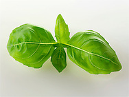 Fresh Basil leaves