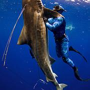 Craig Clasen fighting a 12 foot tigershark shot in self-defense while hunting tuna