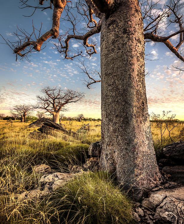 Devonian Reef Conservation Park. Kimberley, Western Australia
