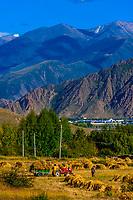 Dagze, Yerpa Valley, Tibet (Xizang), China.