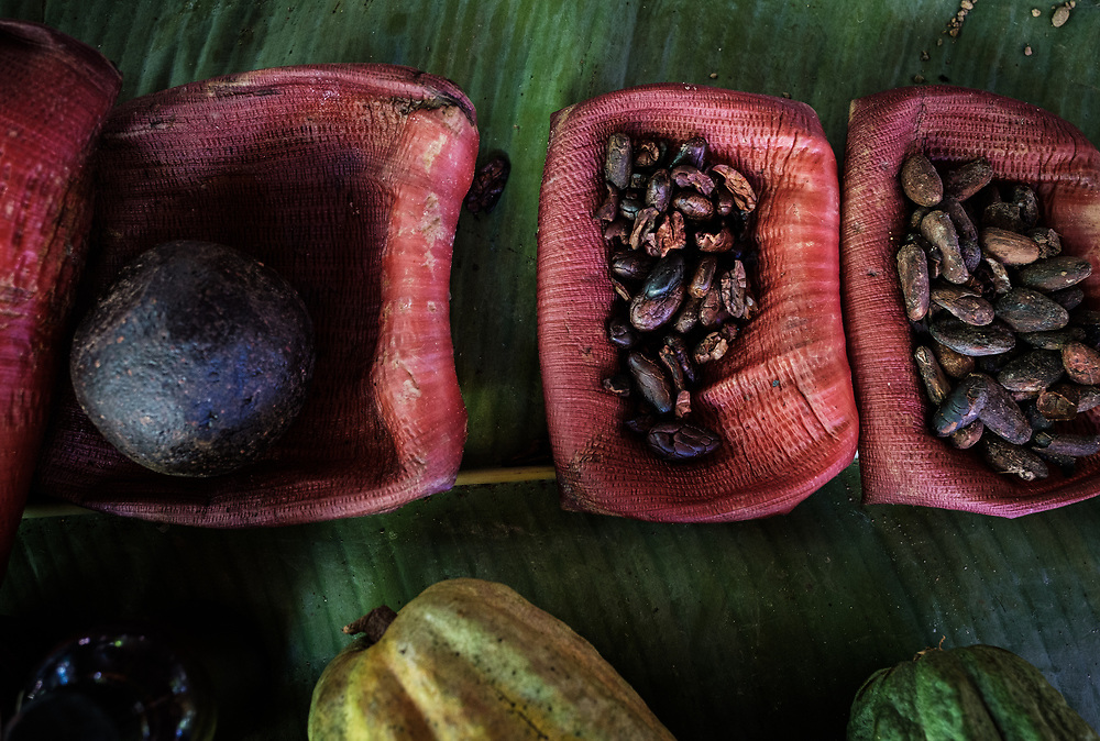 BARACOA, CUBA - CIRCA JANUARY 2020: Detail of Coca Beans in Baracoa. Cocoa farms are spread and widely known in the region. Cocoa and chocolate are one of the products closely linked to these lands identity.