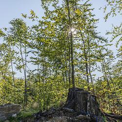 43.46000, -71.15965. Birch Ridge Location A. Facing west. New Durham, New Hampshire.