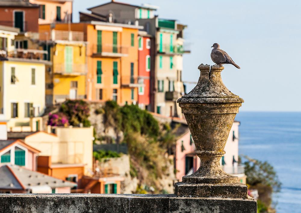 A dove sits on the gate to the cemetery in Riomaggiore, Italy a small coastal town in the Cinque Terre region.