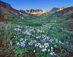 Horizontal image of American Basin field of  wildflowers, mostly purple columbines, in early morning shadow, with tops of Rocky Mountains lit by morning light in background