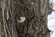Photographs of Birds New Mexico