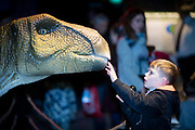 NO FEE PICTURES<br /> 17/12/17 Kyle Beagan age 7, Newbridge pictured at the prehistoric preview and official opening of Dinosaurs Around The World now open at the the Ambassador Theatre  for a limited time only. Embark on a globetrotting expedition around the world to discover the Age of Reptiles! With advanced animatronics, a multi-layered narrative, fossils, authentic casts, cutting-edge research and immersive design elements you'll experience the Age of Reptiles as it comes to life!  Dinosaurs Around the World is open daily to the public from 10 a.m. with last entry at 6pm for a limited time only. Tickets available from Ticketmaster.ie and from the Ambassador Theatre Box Office now. Visit www.mcd.ie for more. Pictures: Arthur Carron