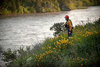 Teton County Search and Rescue volunteers scour the bank of the Snake River on Friday evening just west of Hoback after receiving a report that someone was in the river clinging to a tree. The report turned out to be a false alarm.