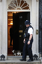 Larry the cat enters Downing Street, London, on the day Boris Johnson became the new Prime Minister.