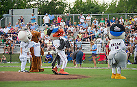 Joining the Laconia Muskrat Mascot is Westy from the Danbury Westerners, Gully and Gully Jr from the Newport Gulls to throw out the first pitches before the start of the 2013 New England Collegiate All Star Game at Robbie Mills Field Sunday evening.  (Karen Bobotas/for the Laconia Daily Sun)