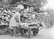 Female forestry workers loading logs onto wheelbarrow, Finland 1942