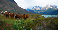Horses at Estancia Helsingfors in Patagonia. Image taken with a Nikon D3s camera and 24-120 mm f/4  lens (ISO 200, 55 mm, f/4, 1/1600 sec)