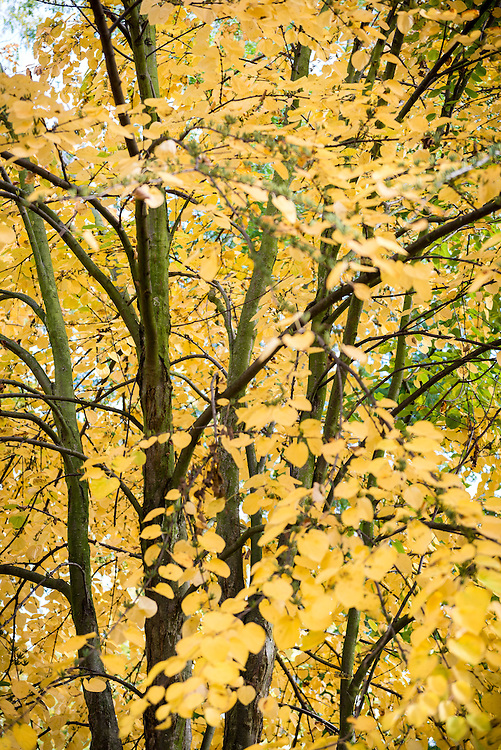 Abstract view of tree in Autumn