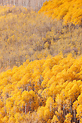 The forests surrounding Park City in (Fall), Autumn showing colour, Utah, United States of America