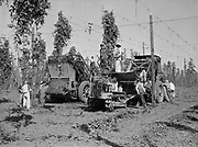 5582Hop picking machines in operation. These machines were developed by the E. Clemens Horst Company. E. Clemens Horst hop ranch near Independence, Oregon. September 1, 1942.