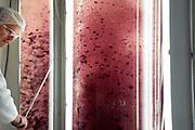 Erwan Le Gelebart from BiotechMarine (BiotechMarine, 22260 Pontrieux, France ) makes extractions from red algae and green algae for the cosmetic industrie. France | Erwan Le Gelebart von BiotechMarine (BiotechMarine, 22260 Pontrieux, Frankreich ) macht extractionen aus unterschiedlichen Algenarten für Kosmetik.