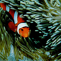 Philippine Coral Reefs