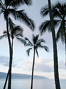 Palm trees on a beach in the small town of Haleiwa, O'Ahu, Hawai'i