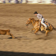 Rodeo, cowboy riding in calf roping contest, Wilsall rodeo Crazy Mountains. offer backdrop. Montana.