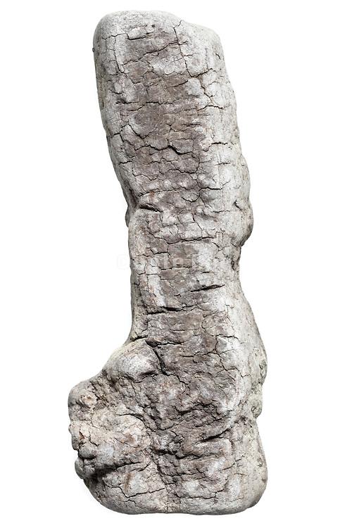 tree bark fragment form natural smoothed