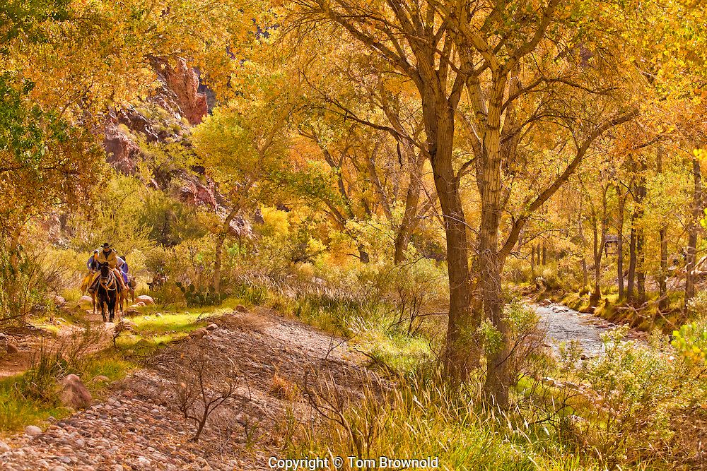 Arriving to Phantom Ranch along Bright angel creek in Grand Canyon, National Park.