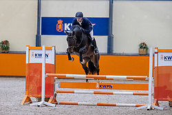 Dijks Demi, NED, Mister Hornet DDH<br /> Fotodag KWPN Hengstenkeuring 2021<br /> © Hippo Foto - Dirk Caremans<br /> 21/12/2020