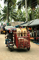 Wednesdays at Malatapay Market are always abuzz with activity. It is a place where livestock growers, local farmers and fishermen converge to sell their fresh produce. It is a whole day fair for the townspeople, shoppers and visitors. Locals from neighboring towns also take part in the market day.  Malatapay provides an experience of the traditional Filipino barter system because the locals trade goods within themselves and with vendors who hail from the nearby Apo Island and those who live in the next towns. On other days, Malatapay is an oddly quiet place with not even a hint of activity going on. The market's exclusive mid week only schedule always makes it something to look forward to for everybody.