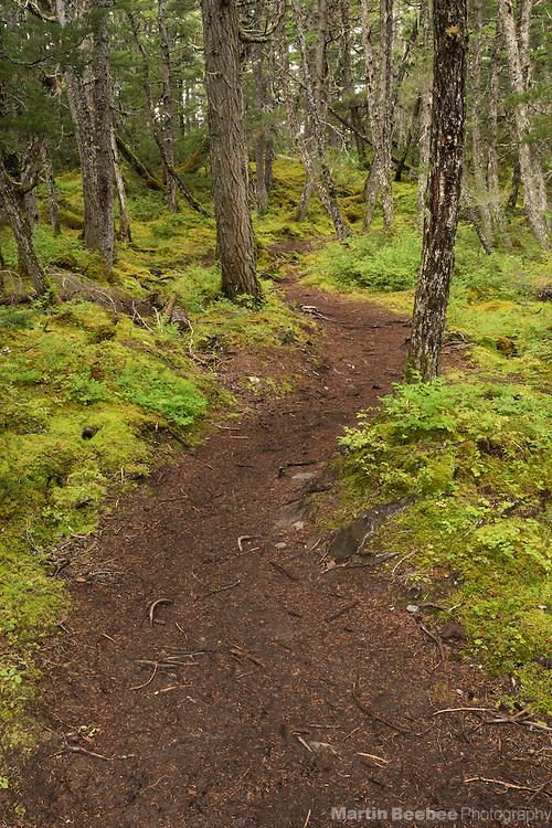 Grayling Lake Trail, Chugach National Forest, Alaska