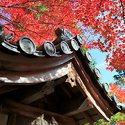 Beautiful autumn foliage at Nison-in in Kyoto, Japan.
