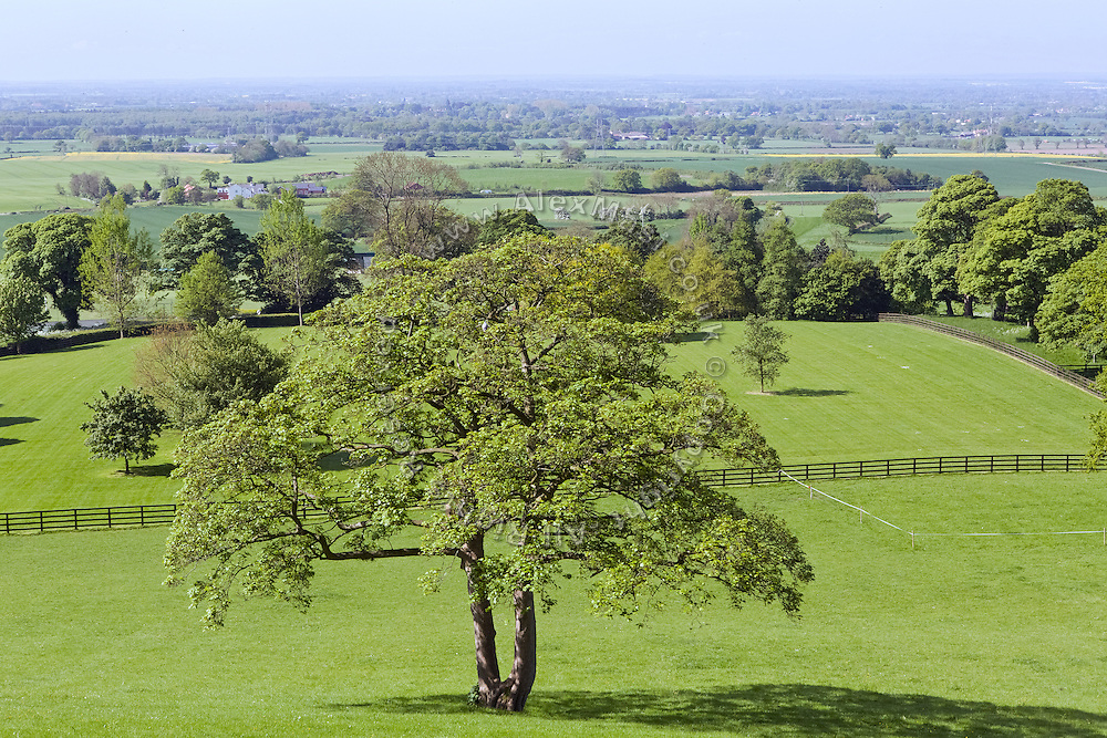 Trees are standing among green fields near Coxwold, Yorkshire, England, United Kingdom.