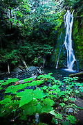 Madison Falls, Olympic National Park, Washington.