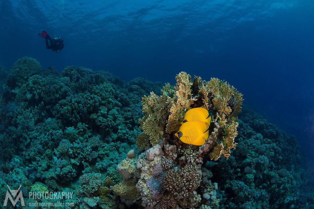 Dive Spot: Breakers house reef (left)