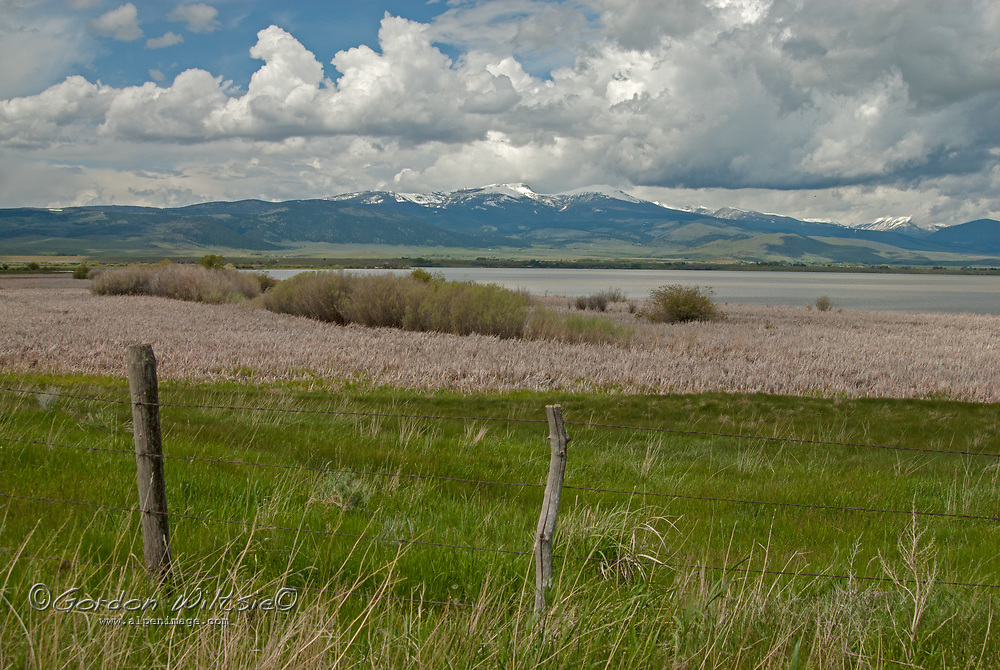 Marshy pastures spread out from the shores of Ennis Lake, a reservoir on Montana's Madison River.