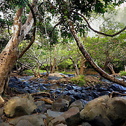 Kuruva island is an ancient sacred forest up North in Kerala surrounded by affluents ot The Kabini river.