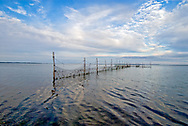 Pound trap, a maze of poles and nets for catching fish, Accabonac Harbor, Springs, Long Island, New York