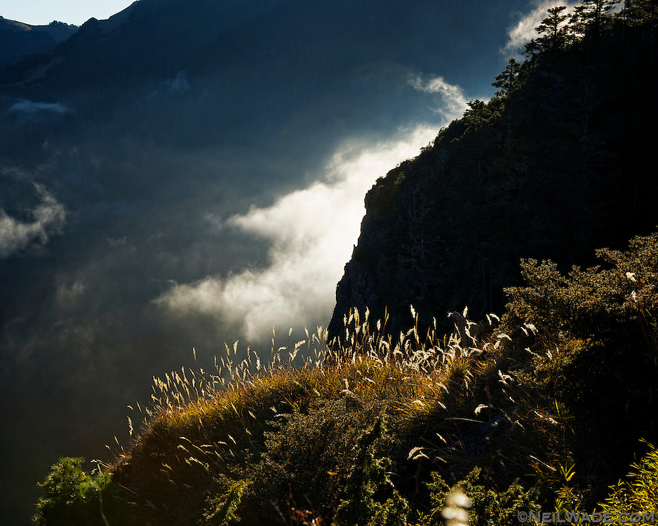 More grass and nice light on the hike to Snow Mountain, taiwan.