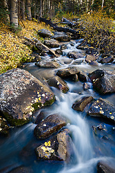 Elk Creek in autumn, with fallen autumn aspen leaves, near Ash Mountain, Vermejo Park Ranch, New Mexico, USA.